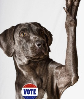 dog - voting