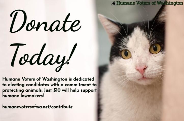 Donate cat